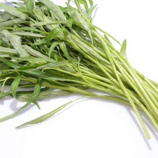 パックブーン|ผักบุ้ง|空芯菜