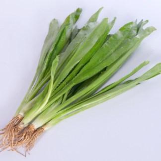 パクチーファラン|ผักชีฝรั่ง|ノコギリコリアンダー