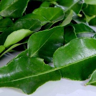 バイマックルー|ใบมะกรูด|コブみかんの葉