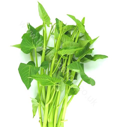 パクブーンタイ|ผักบุ้งไทย|タイの空芯菜